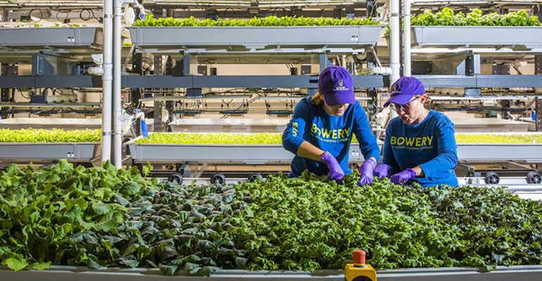 Bowery Farming-vertical farm workers.png