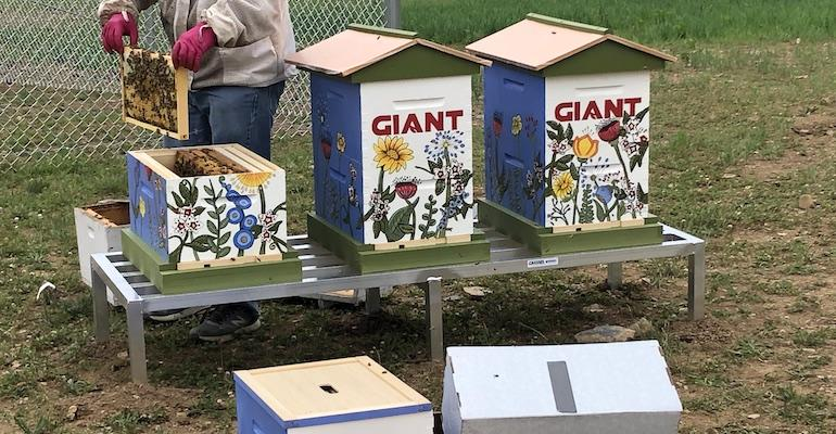 Giant Carlisle beehive-pollinator field