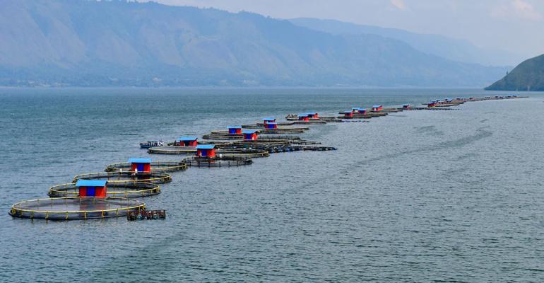 Lake_Toba_Cages.jpg