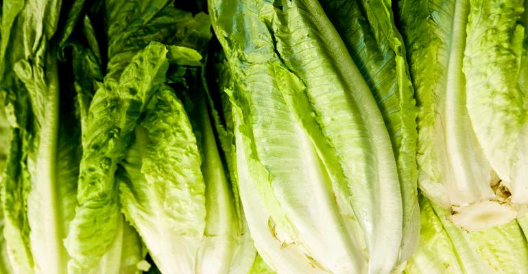romaine lettuce