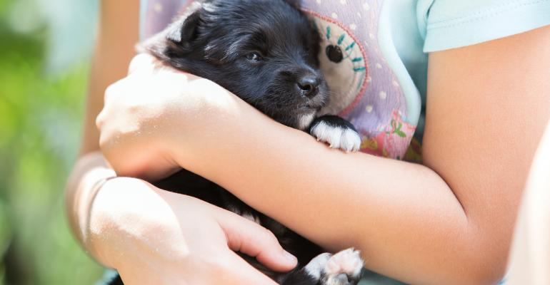 Pet care-Puppy and pal.jpg