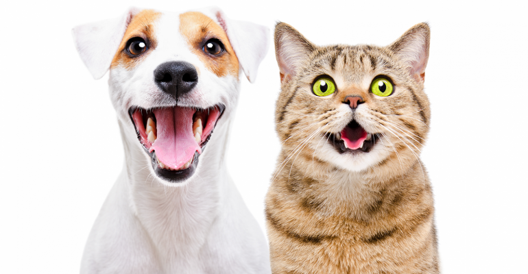 pet-care-coronavirus-happy-dog-and-cat.png