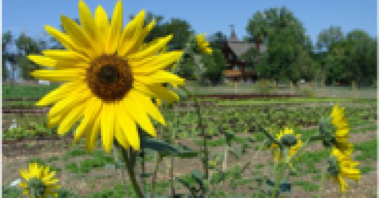 Mike Gilliland's Farm