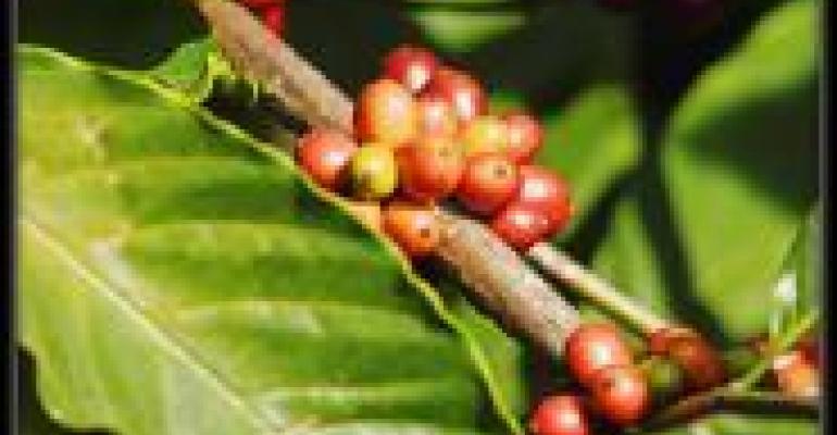 Coffee Retains Organic Sales Title