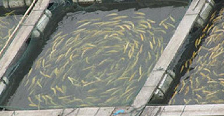 Study: Shallow Claims for Farmed Seafood
