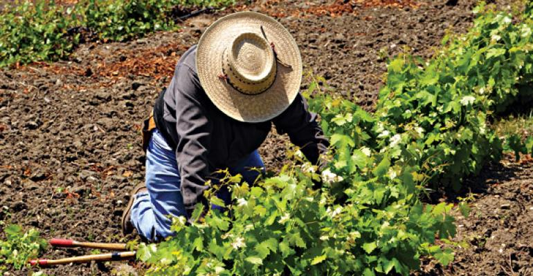 Growing Problem: Tough Immigration Laws Tough on Harvests