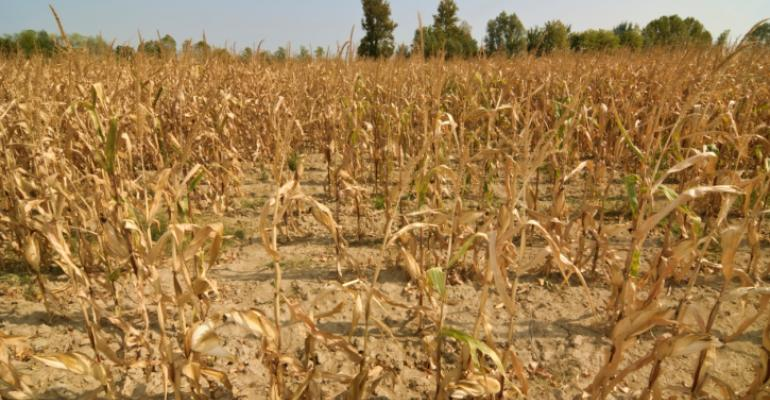 Can the Industry Handle the Drought?