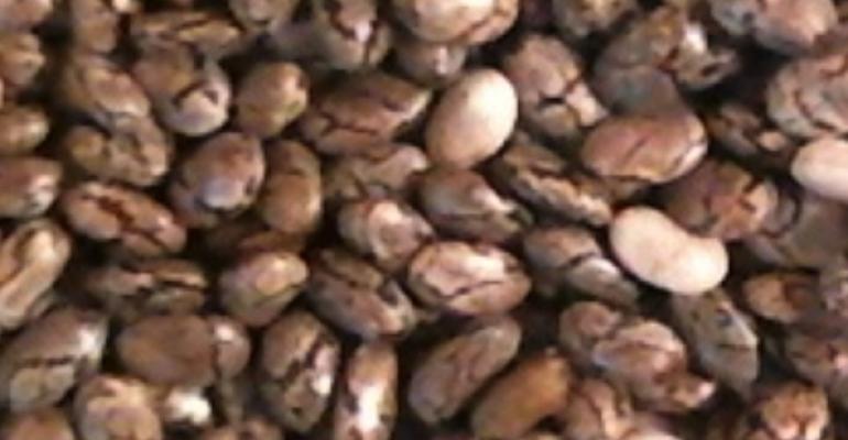 Seeds: Back to Basics
