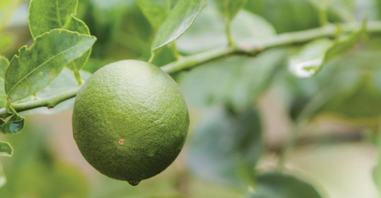 Price outlook poor for limes