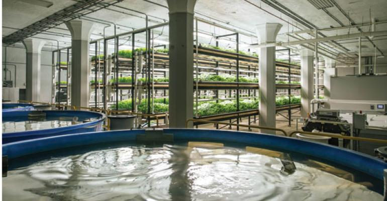 Urban Organics takes aquaponics to Lunds & Bylerly's