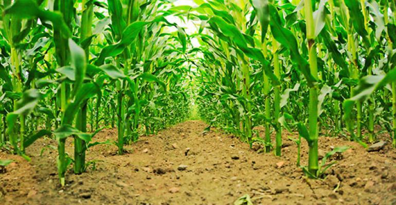 Trade groups back uniform GMO labeling legislation