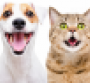pet-care-coronavirus-happy-dog-and-cat.png