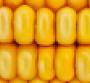 FMI, GMA urge Senate to act on national GMO labeling standard