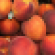 peaches_recalled.png
