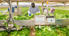 Walmart_IBM_blockchain_food_safety_leafy_greens.png