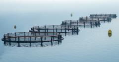 fishfarm.png