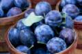 localfruits.png