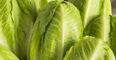 Romaine lettuce-GettyImages-654787830.jpg