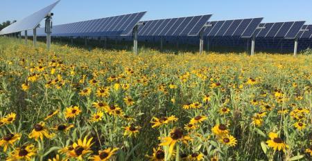 Walmart solar panels.jpg
