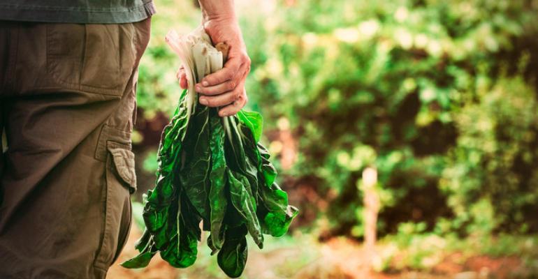 farmer-harvesting-lettuce_3.txt.jpeg