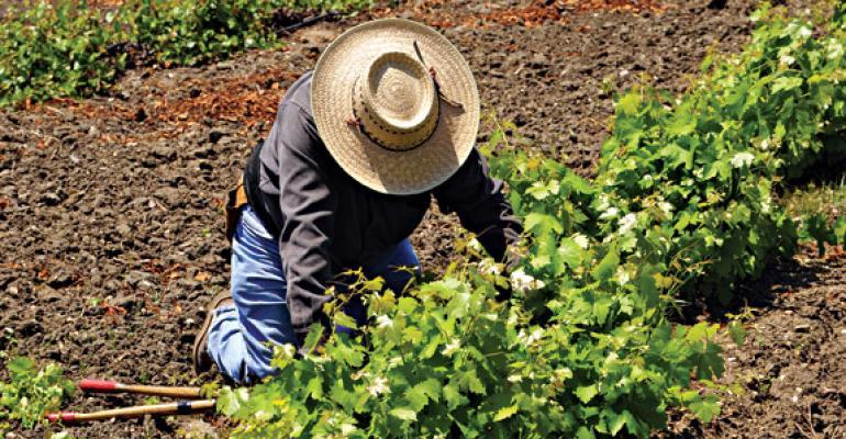 Growing Problem: Tough Immigration Laws Tough on Harvests