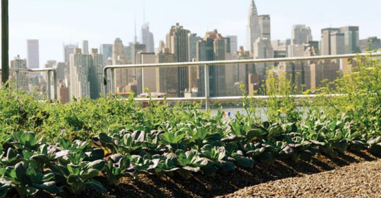 Up on the Roof: Urban Agriculture