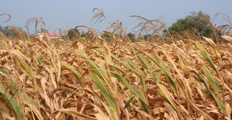 A drought across the Midwest has damaged feed corn crops