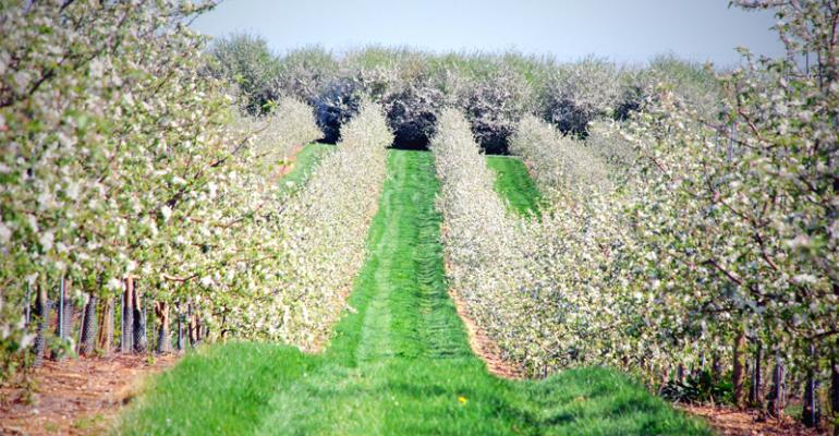 Michigan, New York Expect Apple Crop Comeback