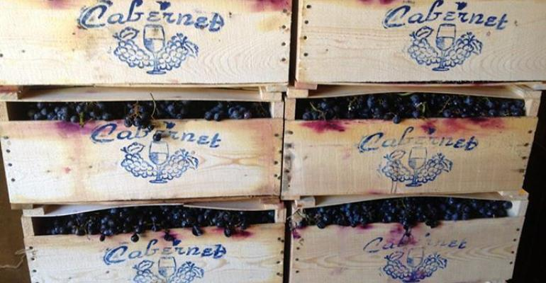 Big Y sells wine grapes and equipment