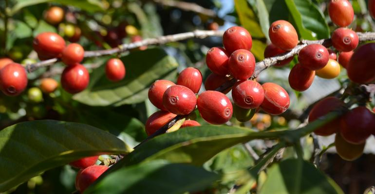 Target makes 'farm-to-cup' coffee improvements