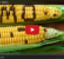 The Lempert Report: Fighting the fear of GMOs (video)