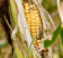 ldquoHow much corn we grow next summer is absolutely essentialrdquo says one ag expert