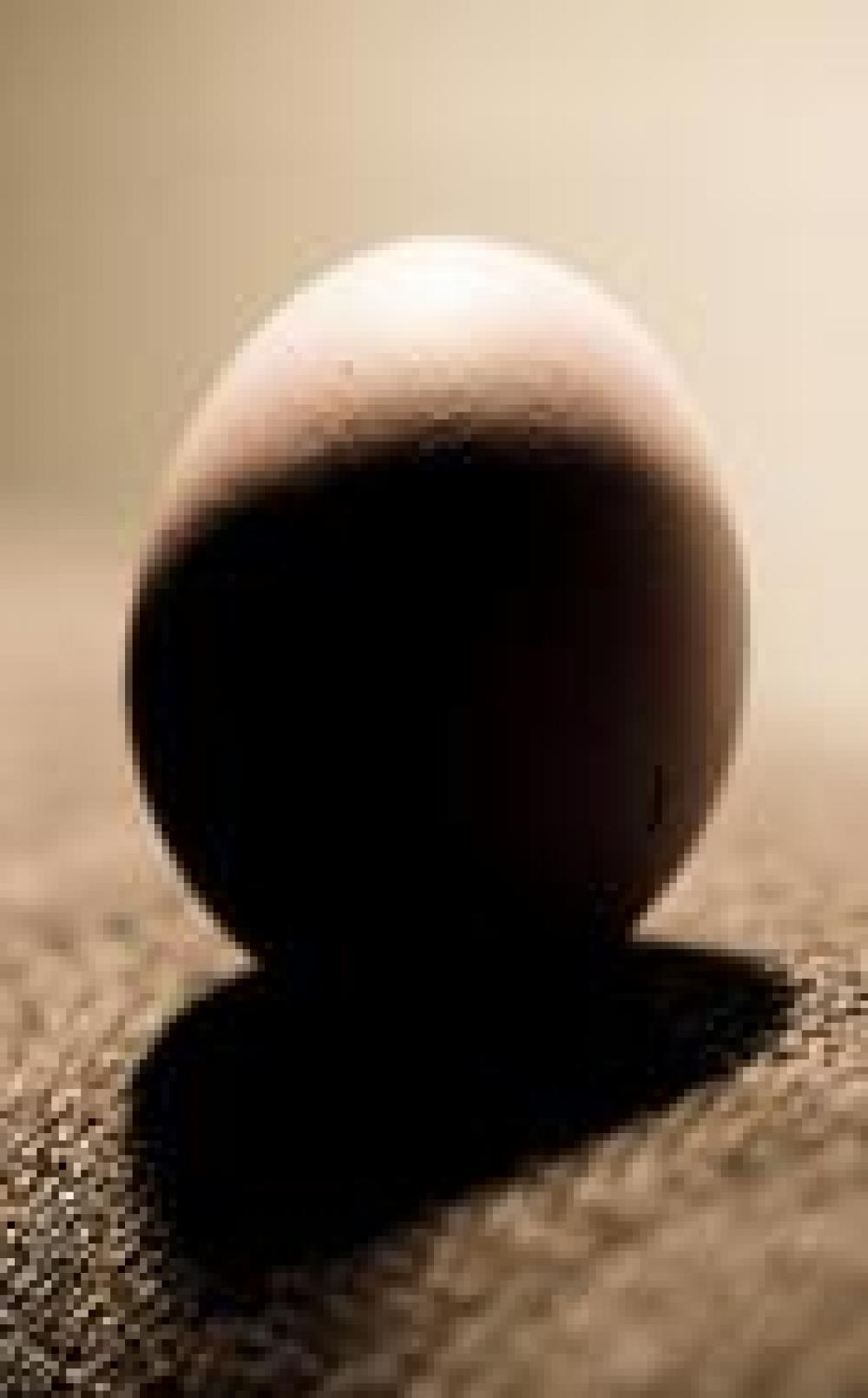Unpacking the Egg Recall