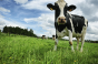 Natural Grocers exec explains yogurt switch