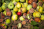 Retailers join with USDA, EPA on food waste reduction